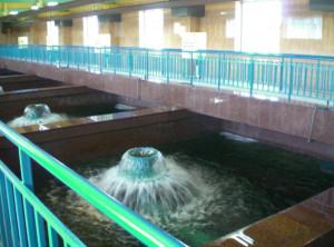 vodozabor